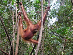 What's at Stake in Borneo