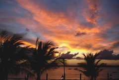 Palms and Clouds (Serlunar (tks for 6.2 million views)) Tags: brazil flickr do fotos pernambuco serrambi premiadas flickrduel serlunar