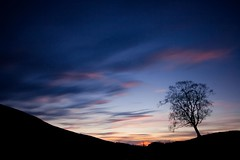 cold lonely night (tom fincher) Tags: winter sunset tree scotland dusk perthshire crieff buchanty