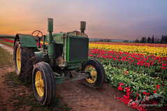 Retired (Gary Randall) Tags: flowers tractor oregon tulips farm johndeere woodburn woodenshoetulipfarm willamettevalley dsc73822