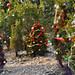 360_Trees_2011_153