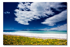 Swansea, Tasmania, Australia (Matthew Stewart | Photographer) Tags: ocean flowers blue light sea sky cloud seascape beach water leaves yellow swansea clouds bay sand matthew stones wave australia stewart tasmania oyster peninsula hazards freycinet visipix 30122011