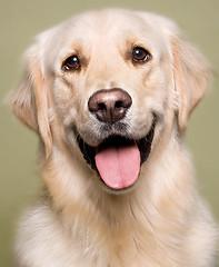 Happy New Year, says Cooper! (Piotr Organa) Tags: portrait dog pet toronto canada cute animal goldenretriever pet100 pet1000 100commentgroup aboveandbeyondlevel1