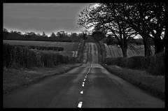 vanishing point  ( 4 of 31) (Kriegaffe 9) Tags: road trees white tree lines tarmac dark vanishingpoint odc whitelines