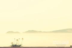 Las flores ms bonitas son las que pintan de colores su soledad... (Roxana Casas) Tags: flores mar niceshot lima playa per amarillo malecon niebla costaverde