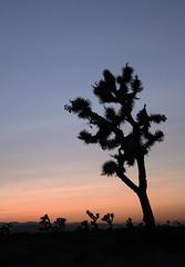 Desert Sunset (Lisa Daisy) Tags: ca sunset night evening desert joshuatree fair clear lancaster antelopevalley palmdale 93536 93550