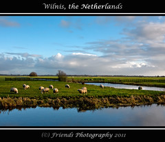 Dutch sheep landscape. (drbob97) Tags: blue trees winter summer sky reflection water dutch grass animal landscape utrecht day ditch cows sheep bright farm or bare country nederland meadow wolken sunny windmills netherland gras lands lucht polder dieren dier landschap schapen kockengen drbob schaap zonnig wilnis spiegelen weilanden landerij friendsphotography drbob97