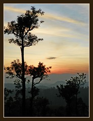 Sunset at Woodbriar Stanmore estate (indianature st2iv) Tags: sunset sky india nature forest evening rainforest tea tamilnadu westernghats teaestate valparai indianature anamalais snonymous anamallais woodbriarestate stanmoreestate