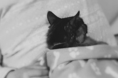 Good dream (mie**) Tags: bw love home smile cat canon relax warm peace heart sweet sleep mother together ae1p fd50mm118 shijimi kodak400tmax