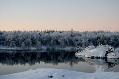 -21    Explored #118 (Helga Haraldsdttir) Tags: winter lake snow cold tree reflections iceland frost sland snjr mvatn speglun hrm helgahar