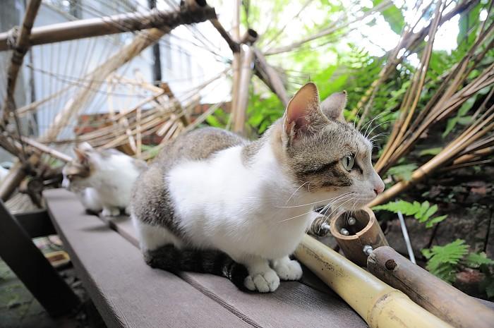 ntut-cat-3