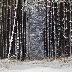 Winter forest (warmianaturalnie) Tags: trees winter snow tree landscape polska zima śnieg warmia drzewo drzewa krajobraz