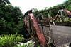 72410_TADEU NASCIMENTO_ESTRADA GRACIOSA PARANA (Tadeu_Nascimento) Tags: paraná água brasil natureza estrada curitiba neblina rios árvores flôres estradadagraciosa hortências tadeunascimento