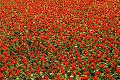 72486_TADEU NASCIMENTO_MEMORIAL UCRANIANO CURITIBA (Tadeu_Nascimento) Tags: curitiba jardins flôres memorialucraniano tadeunascimento