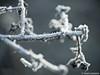 Eiskristalle 16.01.2012