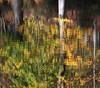 Vibrations d'automne (Yvan LEMEUR) Tags: water automne eau reflet couleur forêt etang