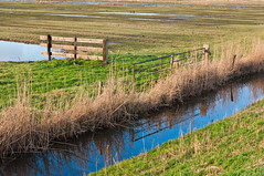 Hekken - Fences (RuudMorijn) Tags: zonzeel natuurgebied hoogezwaluwe noordbrabant brabants brabant natte natuurparel hek hekken drie reflectie spiegelbeeld spiegeling sloot kleurrijk autumn autumnal blue colorful countryside ditch dutch fall fence field grass green holland idyllic landscape mirror natural nature netherlands northbrabant old park peaceful perfectly picturesque poles puddle quiet reed reflected reflection reserve rural rustic rusty season serene silence smooth surface tranquil view water weathered wetlands winter wooden yellow hff