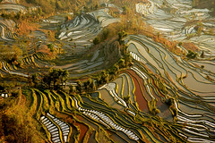 rizires yunnan (ichauvel) Tags: china landscape colours couleurs yunnan paysage ricepaddy chine rizires yuangyuang