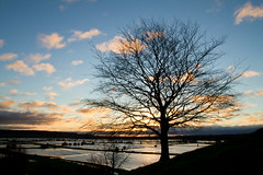 Sunrise & Silhouettes (Mukumbura) Tags: uk morning trees winter light england sky reflection water beauty silhouette clouds sunrise reflections wonderful landscape outdoors dawn scenery view flood unitedkingdom scenic silhouettes somerset scene fields marsh wetland luminance flooded floodplain burrowmump somersetlevels burrowbridge rhynes currymoor