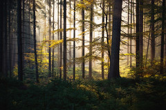 the forest awakens (Dennis_F) Tags: autumn trees light orange sun fall nature colors leaves yellow forest germany landscape deutschland schweiz switzerland licht leaf woods colorful awakening sony herbst natur sigma sachsen rays awake fullframe dslr 50 landschaft sonne wald bume baum mystic bunt saxon 50mmf14 farben mystisch erwachen schsische schsischeschweiz sigma50mm sigmalens a850 festbrennweite sonyalpha sonydslr vollformat sigma5014 sigma50mmf14 sigmaobjektiv dslra850 sonya850 sonyalpha850 alpha850