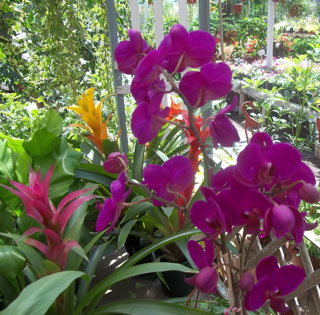 Jardines: The World's Best Photos Of Jardines And Orquideas