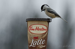 Just give me the Timmies and nobody gets hurt... (Lynn McFulton) Tags: cambridge cup coffee chickadee timhortons riversidepark timbitnation 3652012 2010yip canadianculturalicon whichisworryingreally