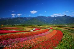 (nodie26) Tags: flowers flower color canon tour taiwan   hualien               60d