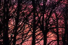 Colour Branch (EJ Images) Tags: uk trees sunset england sky slr silhouette clouds suffolk nikon colours shadows dusk branches silhouettes dslr eastanglia settingsun lowestoft 2014 nikonslr d90 nikondslr pakefield nikond90 55300mmlens ejimages