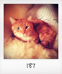 "#DailyPolaroid of 3-4-14 #187 • <a style=""font-size:0.8em;"" href=""http://www.flickr.com/photos/47939785@N05/13875238373/"" target=""_blank"">View on Flickr</a>"