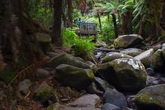 Erskine Falls (2) (My Shutter Shots) Tags: nature water landscape waterfall rainforest lorne erskinefalls
