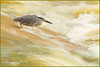 www.durmaplay.com_oyun_wallpaper_81942.jpg (http://www.durmaplay.com) Tags: africa bird heron nature animal river southafrica flow fishing waves wildlife natuur safari afrika waterfowl rapid reiger vogel sandriver gamedrive gamereserve nightheron malamala hvhe1 hennievanheerden wwwdurmaplaycom