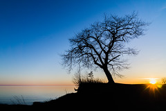 Tree Silhouette (ben.dehaan95) Tags: sunset lake ontario canada tree water silhouette zeiss landscape outdoors golden sony horizon hour burst a6000