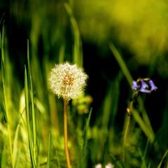 _Seed and Bloom_DSC06757 (Ian Gearing) Tags: park uk trees england west nature woodland arboretum gloucestershire westonbirt trust glos