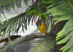 DSC_2873 (2) (adamsdale616) Tags: bird nature nikon d7200
