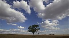 Rural Scene (Francisco Arago) Tags: brazil americalatina brasil rural cores df dia paisagem nuvens campo cerrado fotografia arvores ceu fotografo distritofederal americadosul planaltina planaltocentral ruralscene centrooeste canon1635mm canon5dmkii franciscoarago projetotempo zonaruraldeplanaltina