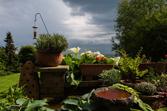 Storm clouds closing in .... (gilliesavo) Tags: flowers sea plants water beauty grass rain clouds garden terrace lilies containers