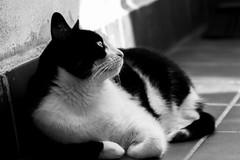 Tola (Egg2704) Tags: animal gatos gato felinos felino animales tola naturalia egg2704