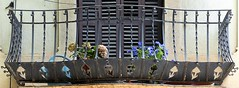Barcelona - Major de Sarri 170 c (Arnim Schulz) Tags: modernisme modernismo barcelona artnouveau stilefloreale jugendstil catalua catalunya catalonia katalonien arquitectura architecture architektur spanien spain espagne espaa espanya belleepoque fer castiron ferdefonte hierro ferro iron eisen gusseisen schmiedeeisen forjado forg wrought forged art arte kunst baukunst ferronnerie gaud fence liberty textur texture muster textura decoracin dekoration deko deco