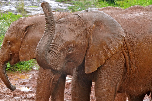 Sheldrick Wildlife Trust