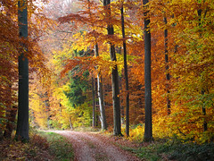 In the Autumn Forest (Habub3) Tags: park street wood travel autumn light holiday plant tree fall nature colors leaves forest canon germany way deutschland licht flora europa europe stuttgart path urlaub herbst natur pflanzen blatt wald bltter baum bunt vacanze weg reise farben g12 rotenberg 2011 strase habub3