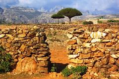 Keybani's yard (Gerry & Bonni) Tags: mountains tree island yemen dragonblood socotra soqotra dixam keybani