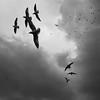 Birds :: iPhone (Jonathan Kos-Read) Tags: china deleteme5 deleteme8 sky blackandwhite bw seagulls deleteme deleteme2 deleteme3 deleteme4 deleteme6 deleteme9 deleteme7 birds square saveme4 saveme5 saveme saveme2 saveme3 deleteme10 chinese iphone goldenratio savem6 iphoneography
