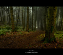 Atmosphere (.Brian Kerr Photography.) Tags: trees mist atmosphere dumfriesandgalloway kirkcudbright briankerrphotography