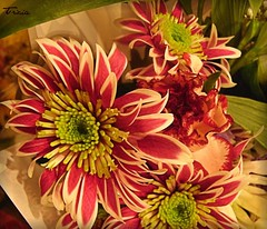 Flowers to cheer (Patricia Speck) Tags: pink flowers light shadow white green leaves yellow landscape petals stamen tricia patricia speck