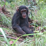 "Chimp <a style=""margin-left:10px; font-size:0.8em;"" href=""http://www.flickr.com/photos/14315427@N00/6505757609/"" target=""_blank"">@flickr</a>"