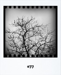 """#Dailypolariod of 15-12-11 #77 #fb • <a style=""""font-size:0.8em;"""" href=""""http://www.flickr.com/photos/47939785@N05/6530623131/"""" target=""""_blank"""">View on Flickr</a>"""