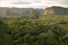 Viales (Nada*) Tags: park trees light sunset mountains green nature beautiful nationalpark cuba reserve oxygen palmtrees cuban vinales pure viales