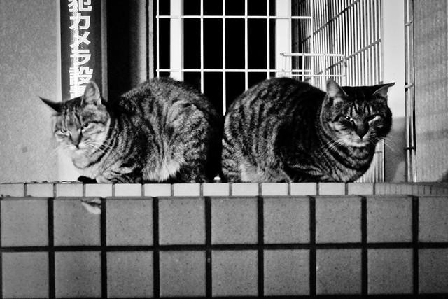 Today's Cat@2011-12-25