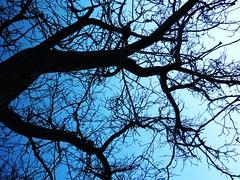 Bajo el arbol (lefabuleuxdestindameliepoulain) Tags: sky tree azul river cielo rbol sorbe razbona