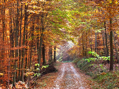 Autumn Forest (Habub3) Tags: park street wood travel autumn holiday plant color tree fall nature leaves forest canon germany deutschland reisen flora europa europe stuttgart path urlaub laub herbst natur blatt holz wald baum hdr bunt vacanze weg farben g12 rotenberg leav 2011 strase habub3 mygearandme